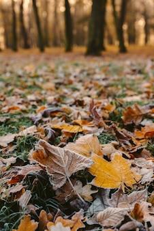 Alba nel parco e nebbia, l'inizio dell'inverno, primi piani su foglia congelata