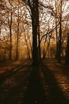 Alba nel parco e nebbia, l'inizio dell'inverno Foto Premium