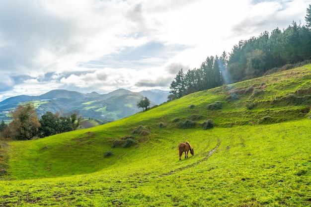 Alba con un cavallo selvaggio sul monte arno nel comune di mutriku a gipuzkoa. paesi baschi, spagna