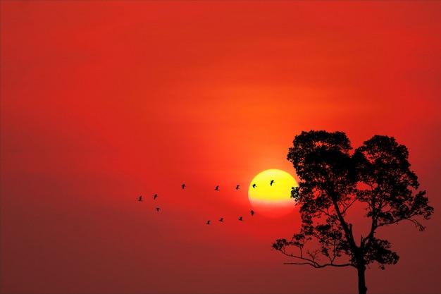 Il tramonto indietro sugli uccelli della siluetta vola via a casa e l'albero sul cielo