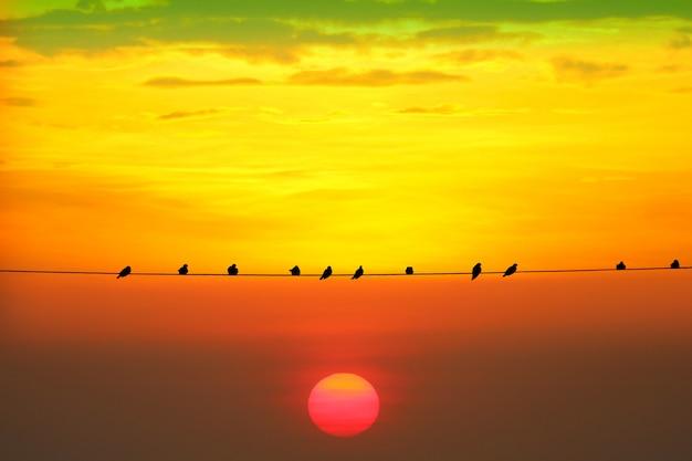 Il tramonto torna sulla siluetta la sera arancione rosso scuro si appanna sul cielo e sull'uccello sulla linea elettrica di potere