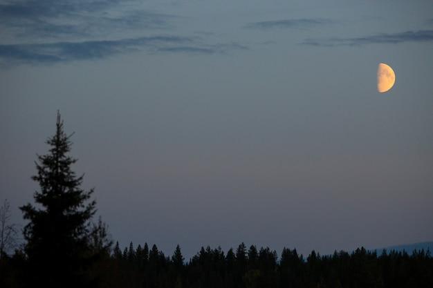 Tramonto nelle foreste della lapponia, finlandia settentrionale