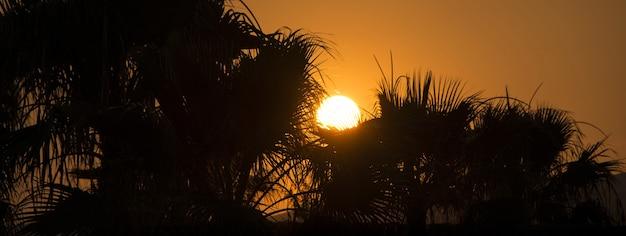 Sagoma di palme al tramonto, immagine banner con spazio di copia