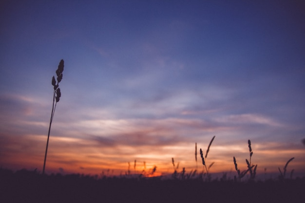 Nuvole del cielo di tramonto. paesaggio di campagna sotto il cielo variopinto scenico al tramonto dawn sunrise. sole sopra l'orizzonte, orizzonte. colori caldi.