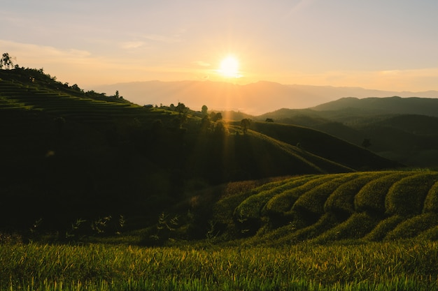 Tramonto dei campi terrazzati in chiangmai