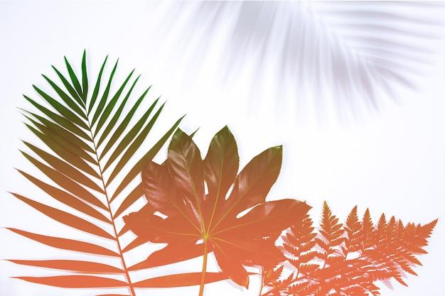 Luce del sole. foglie esotiche tropicali estive isolate su priorità bassa bianca. design per biglietti d'invito, volantini. modelli di design astratti per poster, copertine, sfondi con copyspace per il testo.