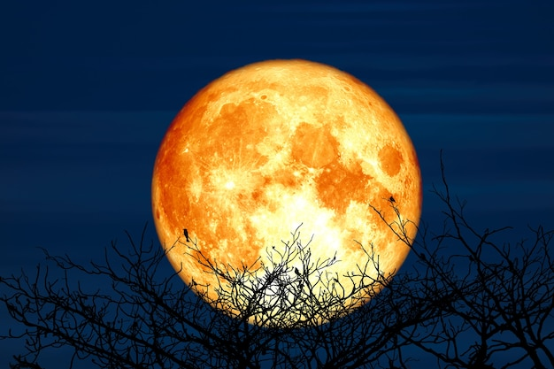 Super sturgeon luna e silhouette albero di cocco montagna nel cielo notturno, elementi di questa immagine ammobiliati dalla nasa