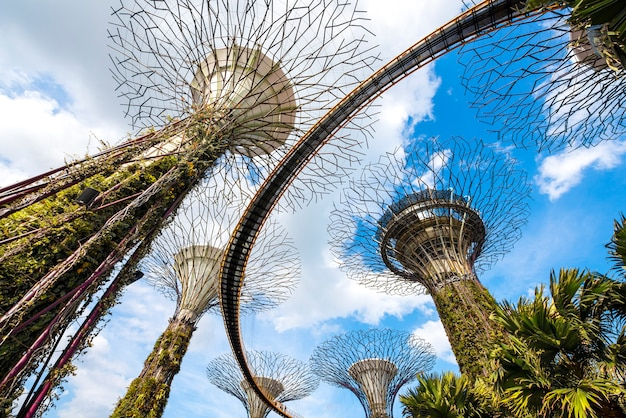 Super scanalatura degli alberi nel giardino della baia, un luogo popolare per i turisti a singapore