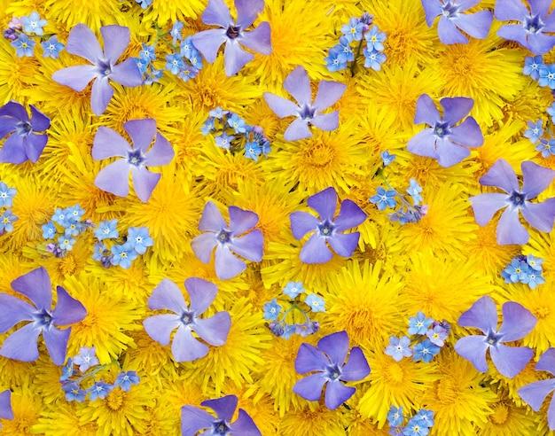 Superficie con dente di leone giallo e fiori blu pervinca e nontiscordardime