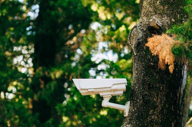 Telecamera di sorveglianza sulla telecamera nascosta albero nella foresta