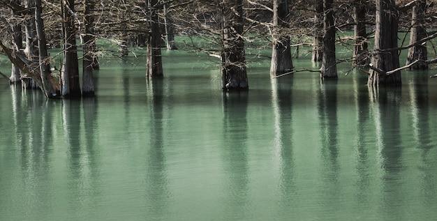 I cipressi palustri si trovano nell'acqua calma del lago e vi si riflettono.