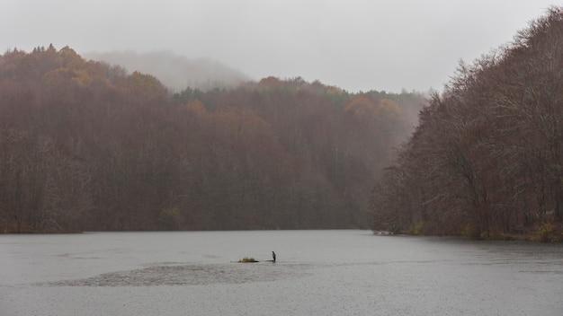 Palude di santa fe in una giornata piovosa con un grande cormorano nel midle