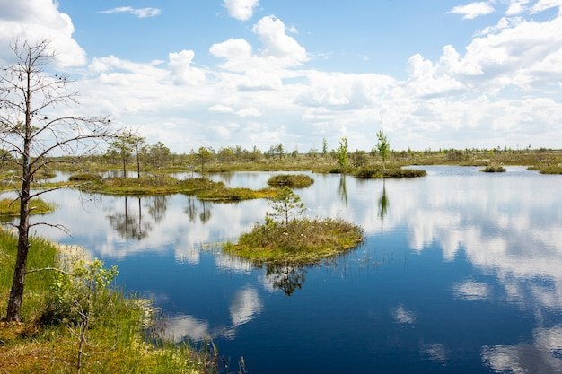 Paludi. le paludi bielorusse sono i polmoni dell'europa. riserva ecologica yelnya. foto di alta qualità