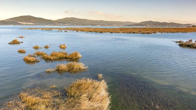 Le paludi, le zone umide erbose coprono una parte della costa