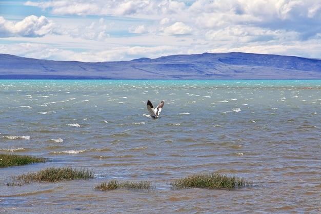 Swan che vola sul lago