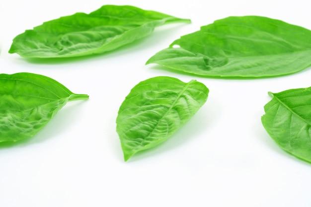 Erba dolce del basilico che cresce in un orto biologico.