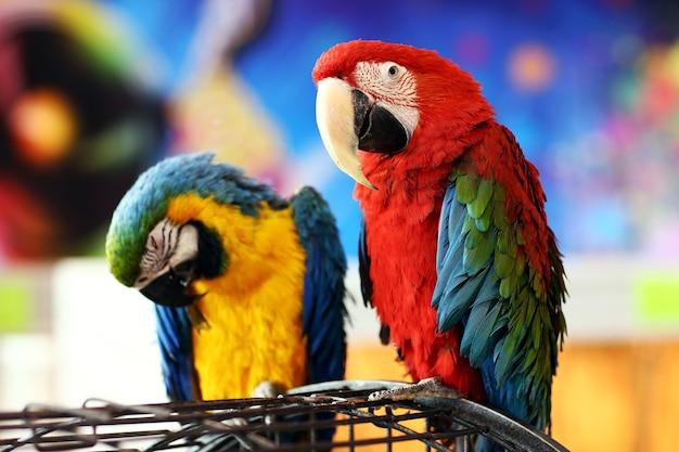 Dolce coppia di pappagalli seduto su una gabbia