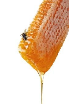 Dolce miele e favo con un'ape. muro bianco isolato.