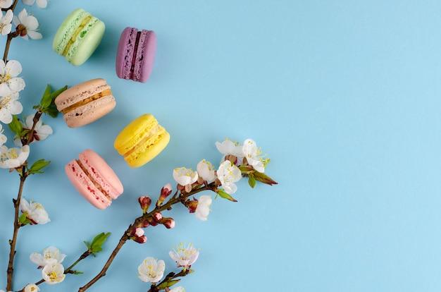 Dolci macarons o amaretti decorati con fiori di albicocca in fiore sul blu pastello