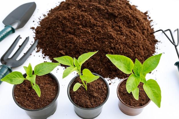 Piantine di paprika dolce in un vaso di plastica e un mucchio di terra fertile su uno sfondo bianco