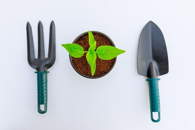 Alberello di peperone dolce in vaso di plastica e attrezzi da giardino isolati su bianco