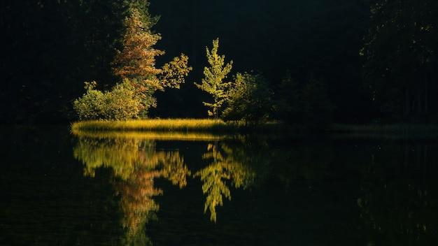 Scenario naturale simmetrico con alberi retroilluminati che crescono su una riva del fiume
