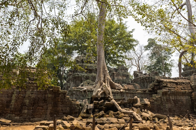 Tempio di ta prohm, angkor wat, cambogia