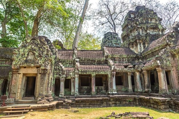 Rovine del tempio di ta prohm in angkor wat a siem reap, cambogia