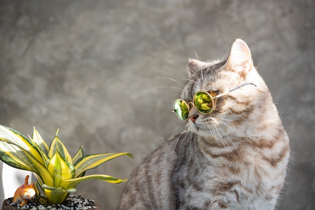 Colpo di testa di gatto soriano indossa occhiali con un cactus in vaso di terracotta verde