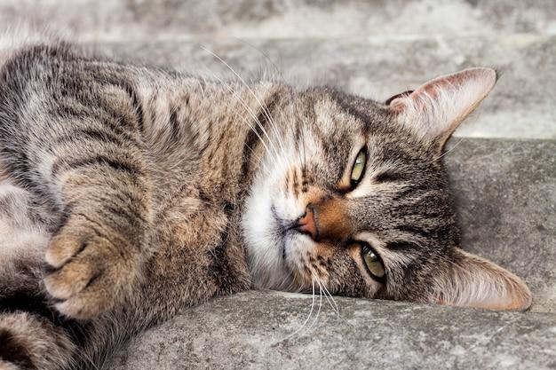 Gatto di soriano che si trova su un tetto di ardesia e sul riposo