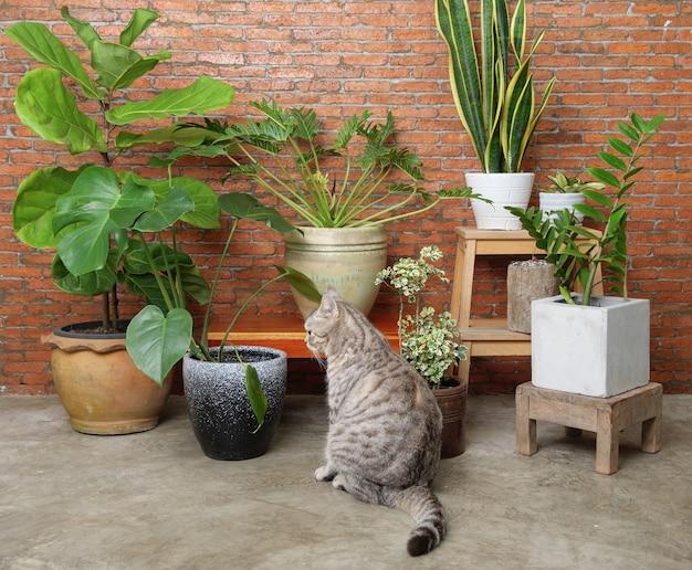 Il gatto soriano si siede nel muro di mattoni interno del soggiorno con piante d'appartamento purificate dall'aria, monstera, philodendron, ficus lyrata, pianta del serpente e gemma di zanzibar in vaso