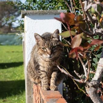 Gatto soriano sulla parete al sole e foglie ed erba sfocate