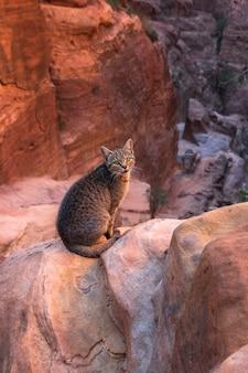 Tabby cat con gli occhi verdi sullo sfondo delle rocce rosse del canyon di petra in giordania