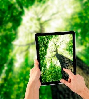 Computer tablet in mano sui boschi.