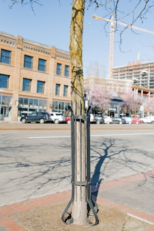 Tacoma, washington, usa. protezione metallica di un tronco d'albero su una delle strade della città