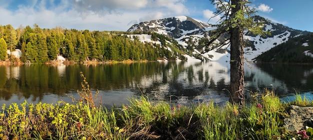 Lago taiga nei monti altai, neve sulle piste e fiori