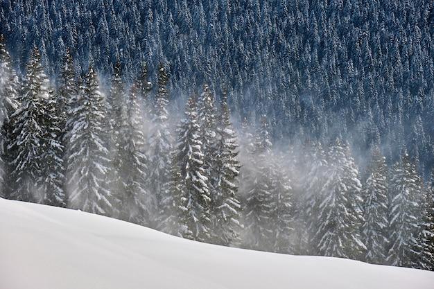 Alti pini sempreverdi durante abbondanti nevicate nella foresta di montagna invernale in una fredda giornata luminosa.