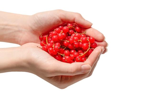 Ribes rosso saporito in mano della donna isolata su fondo bianco. vista dall'alto.