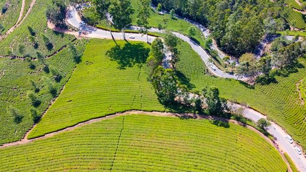 Piantagioni di tè a munnar, kerala, india. bella vista sulle verdi colline.