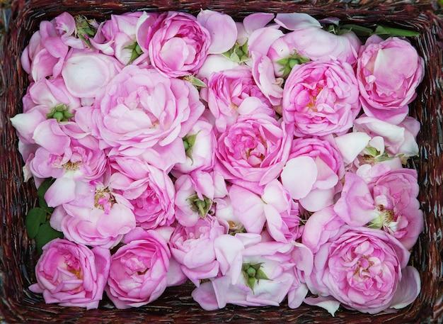 Petali di rosa del tè nel cestino