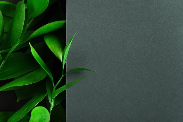 Foglie di albero del tè verde su sfondo scuro.