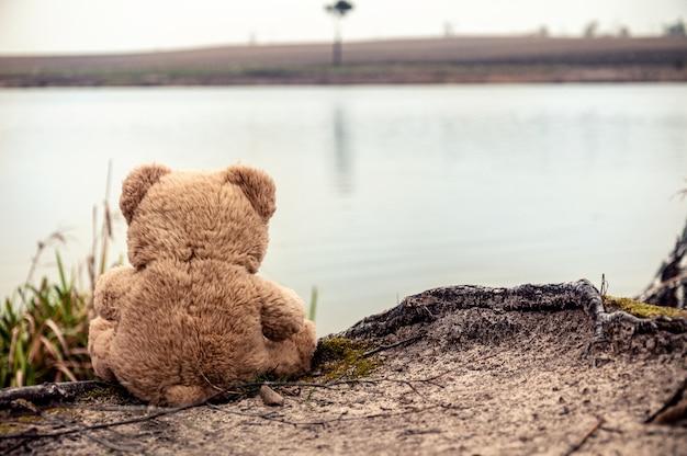Un orsacchiotto sul lago si siede sulla radice di un albero e guarda l'altra sponda.