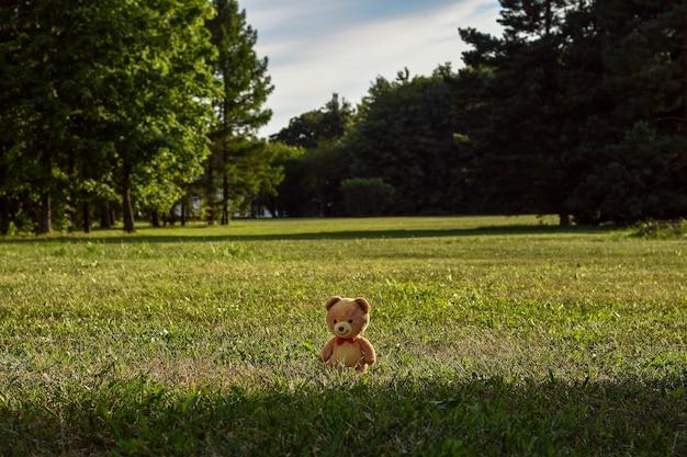 Orsacchiotto all'aperto nel parco in una giornata estiva