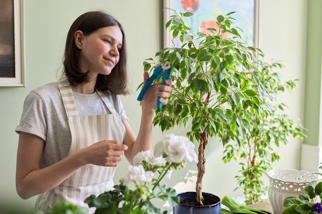 La ragazza teenager taglia le cesoie da giardino del ficus della pianta d'appartamento. coltivazione e cura delle piante in vaso da interno. hobby e tempo libero, giardinaggio domestico, giungla urbana, concetto di amici in vaso