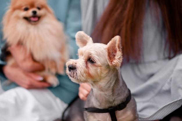 Le ragazze adolescenti che abbracciano piccoli cani da compagnia in un parco all'aperto