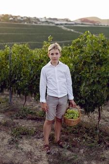 Ragazzo adolescente scolaro in una camicia bianca si trova in un vigneto al tramonto e tiene un cesto di uva verde