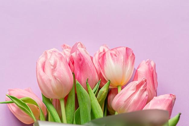 Teneri tulipani rosa su sfondo viola pastello.