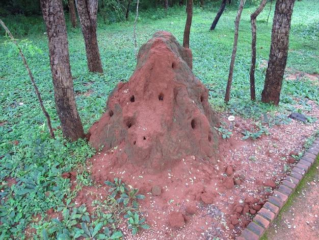 Il termitaio nel villaggio di polonnaruwa, sri lanka