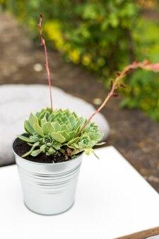Terrazza con tavolo in un bar oa casa, piante grasse in vaso all'aperto, concetto di design del paesaggio