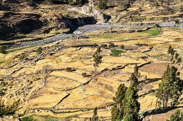 Campo terrazzato all'interno del canyon del colca in perù